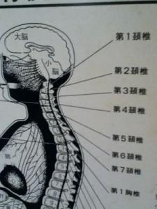 人体神経系図